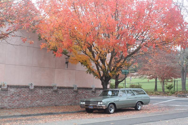 Biquette under a red autumn tree
