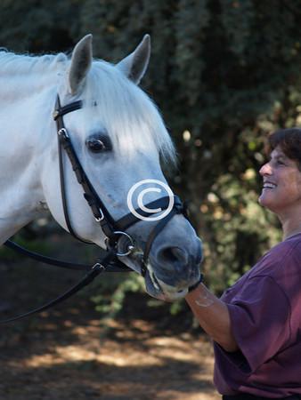 Seven Oaks School Horses