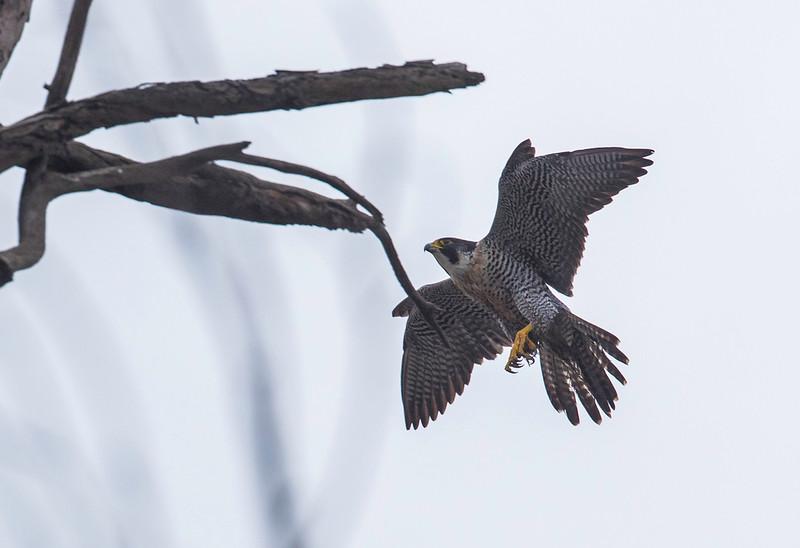 HNBH Birds9.jpg