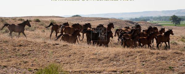 Ranch38-3093.jpg
