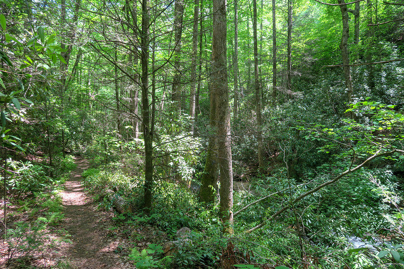 Spencer Branch Trail -- 2,500'