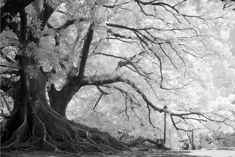 Tree 2 lite 12x18.jpg