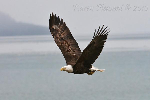 Alaska's Eagles