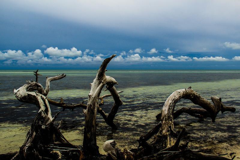 BahiaHondaTreesinocean-edited.jpg