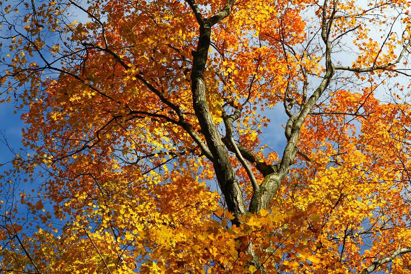Fall Sky 1.jpg