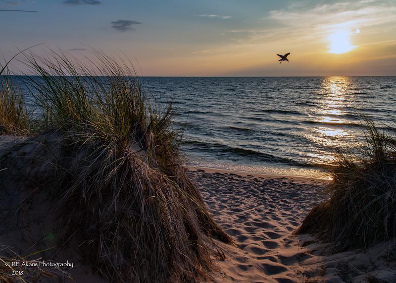 Oval Beach 4604.jpg