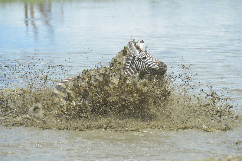 East Africa Safari 343.jpg