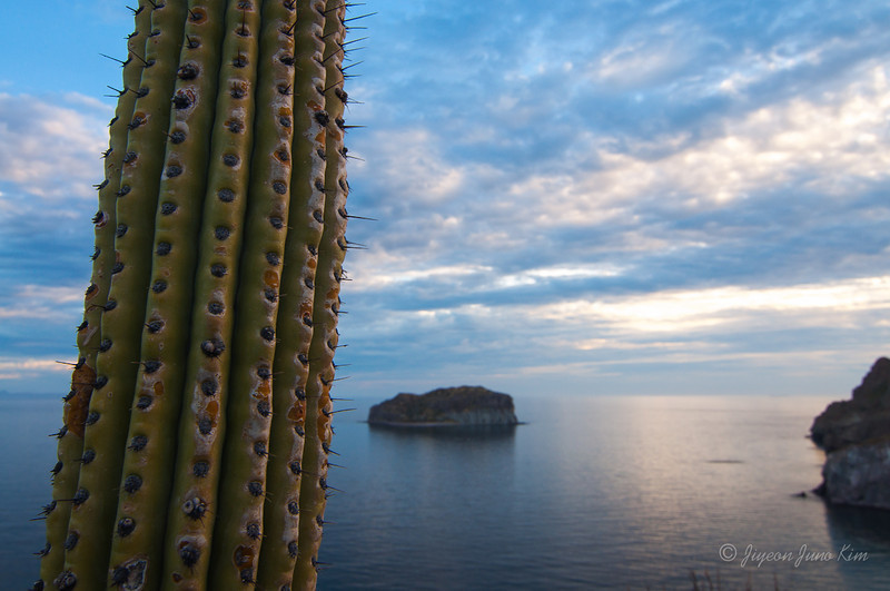 Sea of Cortez_Baja_Mexico.jpg