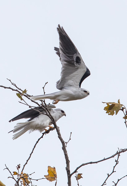 White Kite-4.jpg