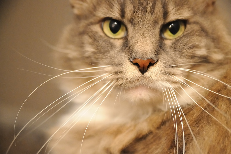 Love Puff's whiskers.