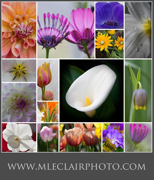 12 x 14 flower.jpg