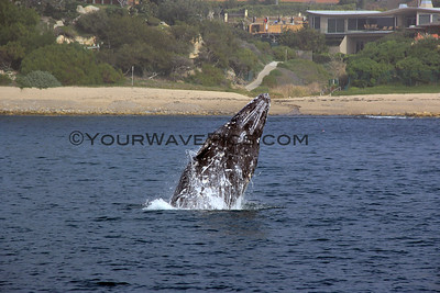 Whale Watching in Orange County