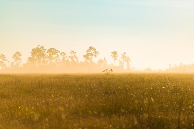 Everglades (33 of 60).jpg