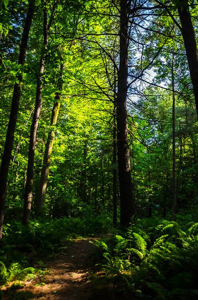 Summer in Vermont 2014