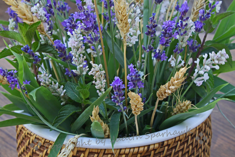 Basket of Lavender ~ This was one of many arrangements of lavender at the festival.
