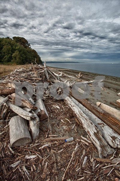 Drift wood (and plastic bottles) accumulates on the beaches of Point Robinson on Vashon Island, WA. 2203