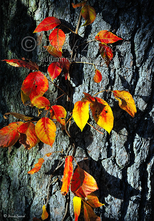 Frank Zemak - Photo Gallery 1 - Prints, Greeting Cards & More
