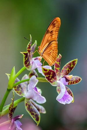 Cleveland Botanical Gardens - Orchid SHow - Feb 3, 2013