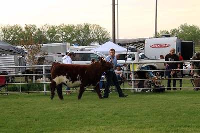 Intermediate Beef Showmanship Sat