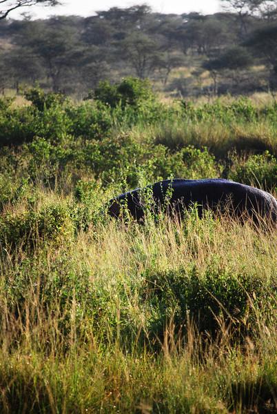 Serengeti (93).JPG