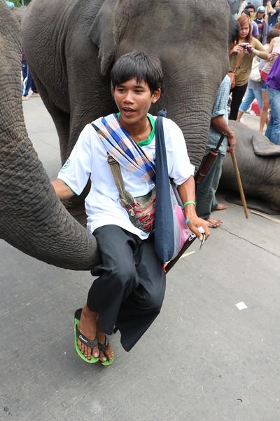 2014-11-14 Surin Elephant Welcome Feast 698.JPG