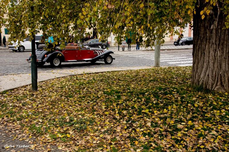 מכונית 5.jpg