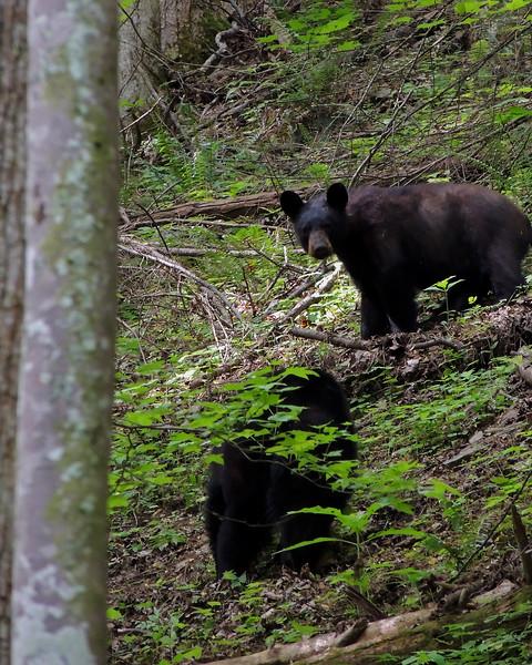 bear 03.jpg