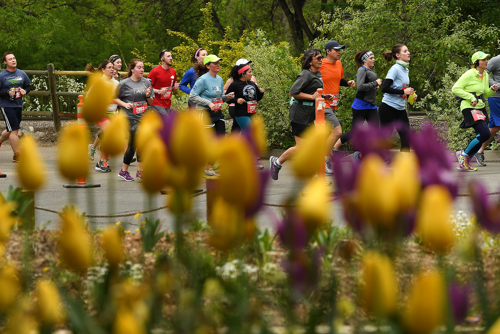 . DENVER, CO - MAY 15: Hundreds of runners, running by beautiful spring tulips, make their way through the Denver Zoo, which was around the three mile marker of the 11th annual Colfax Half Marathon on May 15, 2016 in Denver, Colorado.  Thousands of runners took part in the annual springtime race which included a marathon, a marathon relay,  a half marathon and the urban 10 miler.  (Photo by Helen H. Richardson/The Denver Post)