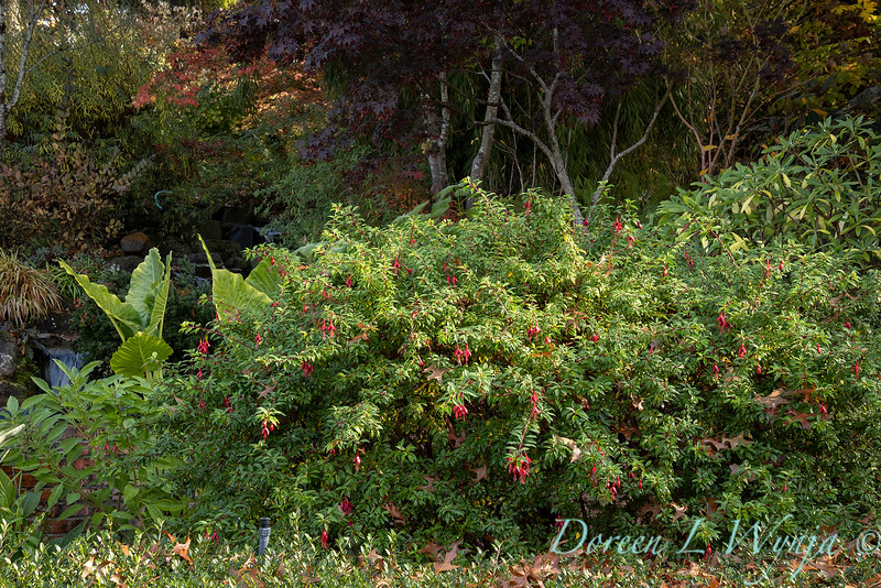 Dietrick fall garden_2043.jpg