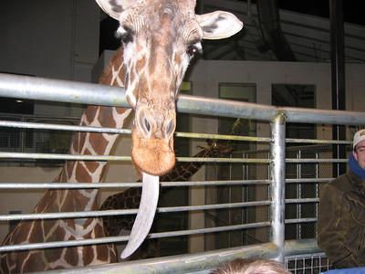 Electric Safari - December 2006