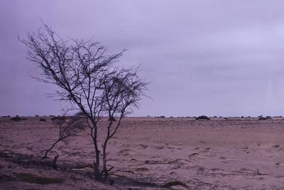 Peru 2012 - Dag 4: Pimentel (Noordkust Peru)