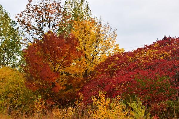 Rouge National Urban Park, Toronto (October 2020)