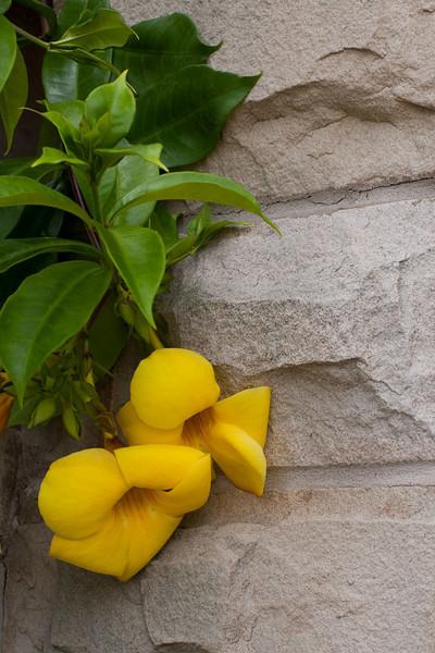 IMG_6643-yellow-stone www.jpg