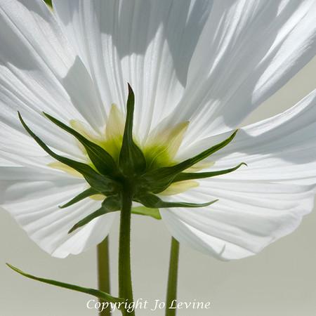 The Secret Life of Flowers