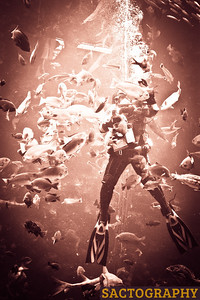 2012.02.12 - Monterey Bay Aquarium