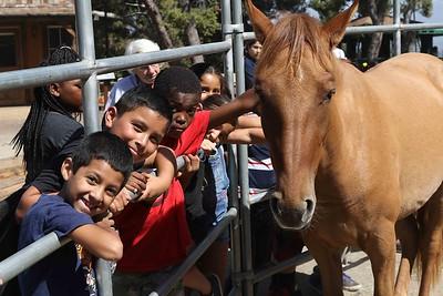 Horse & Burros