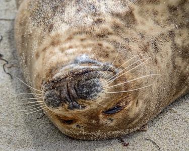 Seals, Seals, Seals