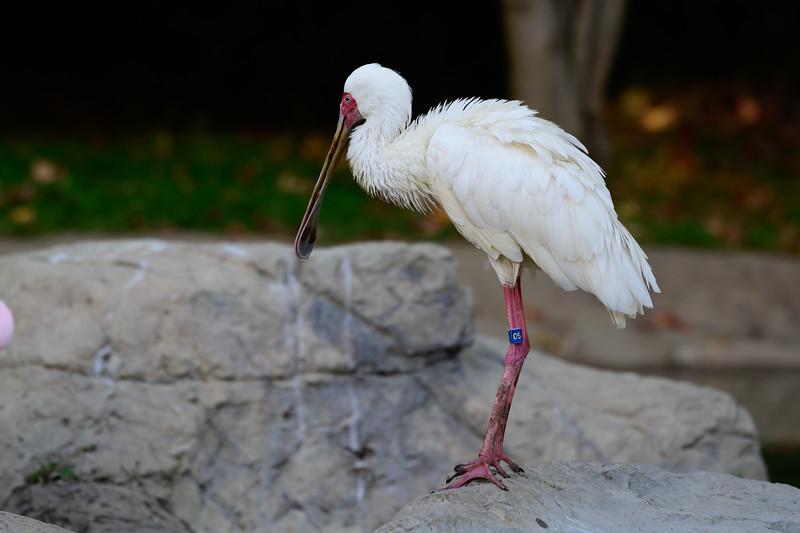 Oakland Zoo-71207-12.jpg