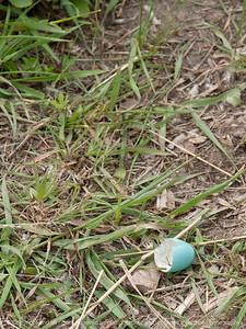 egg_robins-wdsm-23may15-09x12-001-3364