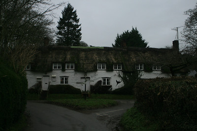 Dorset - Plush