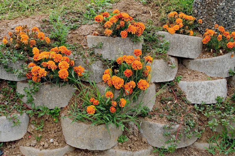 Marigold Wall.jpg