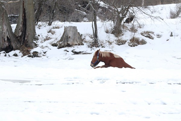 BWFD RESCUE HORSE FELL THROUGH  ICE