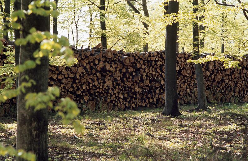 1980_Natur_Skane-50.jpg