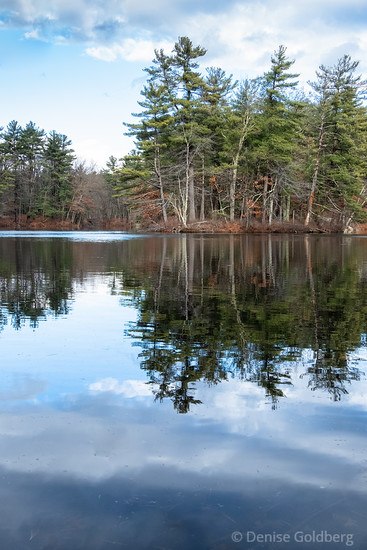 reflections in a pond, Harold Parker State Forest
