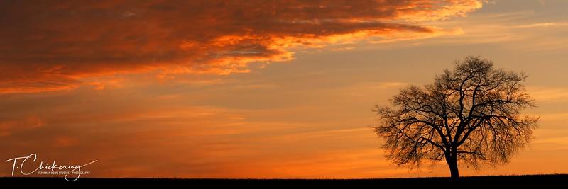 Monocacy Tree at Sunset Pano-1505677324756.jpg