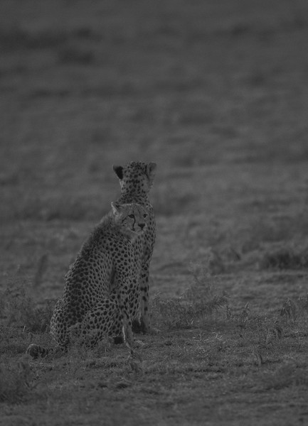 Tanzania_Feb_2018-113.jpg