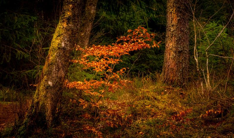 Forest Shadows-092.jpg