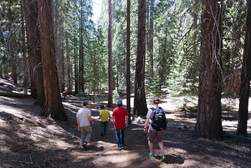 Sequoia_0217.jpg