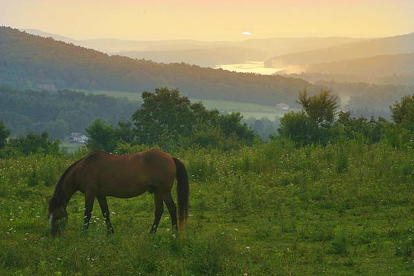 Horses on Rte 219