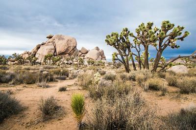 Joshua Tree and Palm Springs